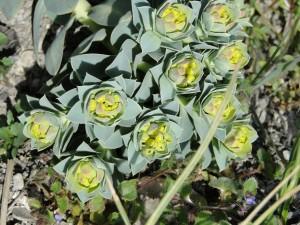 DSC00871-300x225 dans mon jardin d'agrément